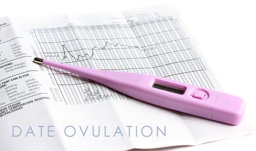 date de l'ovulation femme